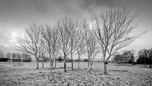 Trees company by Flymoman