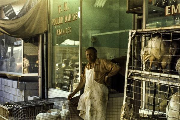 Toronto Poultry by gajewski