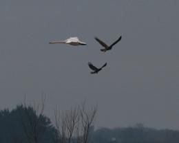 Trio of birds.