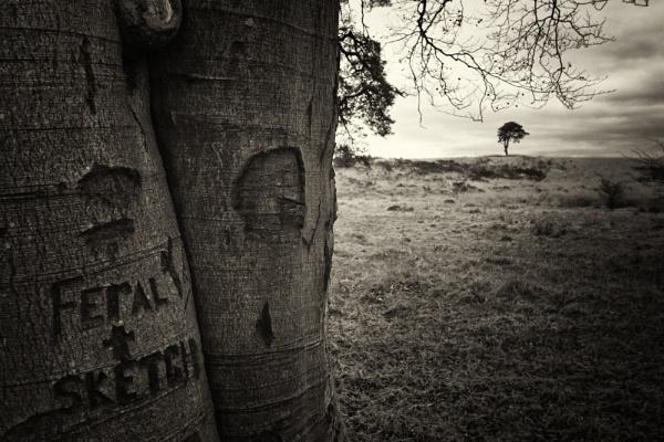 Priddy Tree by Janboy