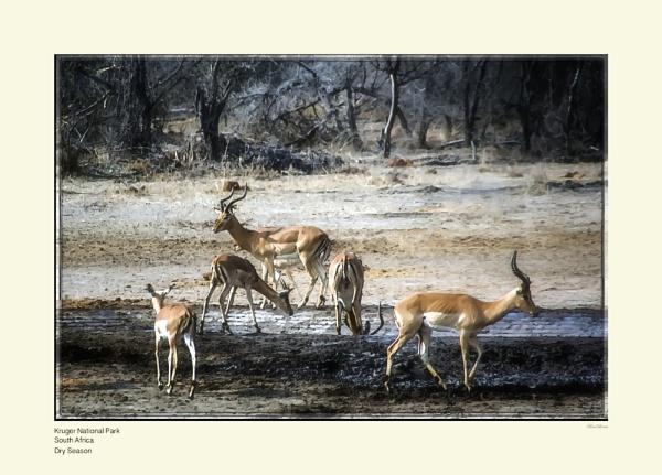 South Africa - Dry Season by Pentaphobian