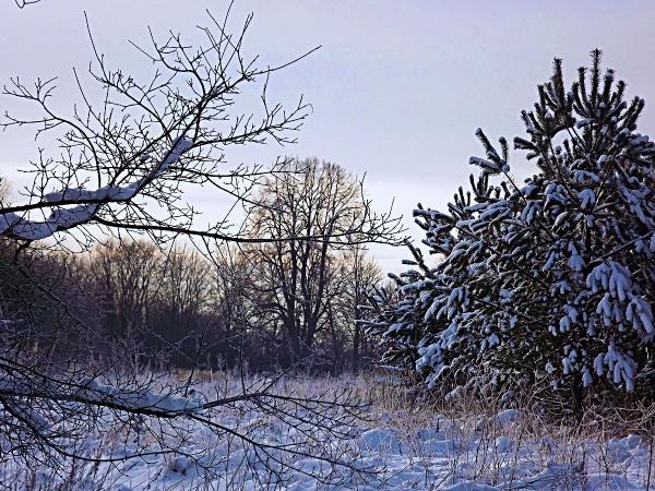 Snow by kazeva