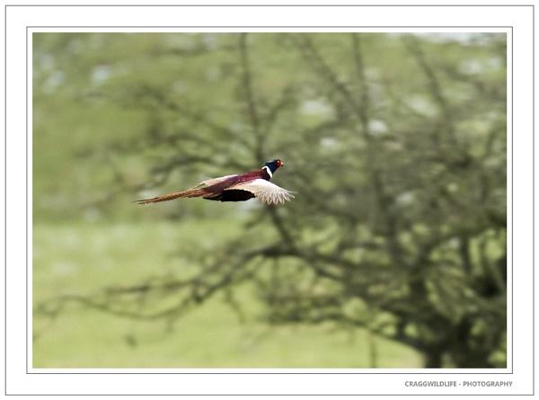 yorkshire wildlife by craggwildlifephotography