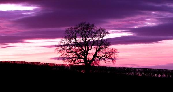 An Evening Tree by Dan1984