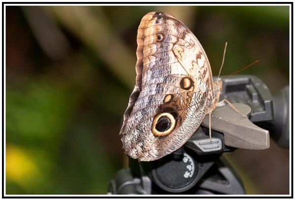 Butterfly by jacks59