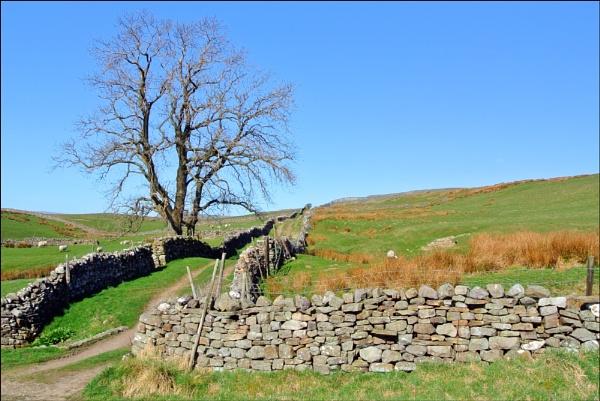 A Yorkshire Lane by KentishChap