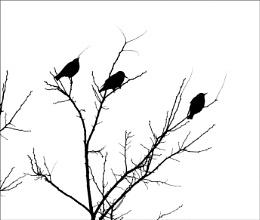 bob's birds