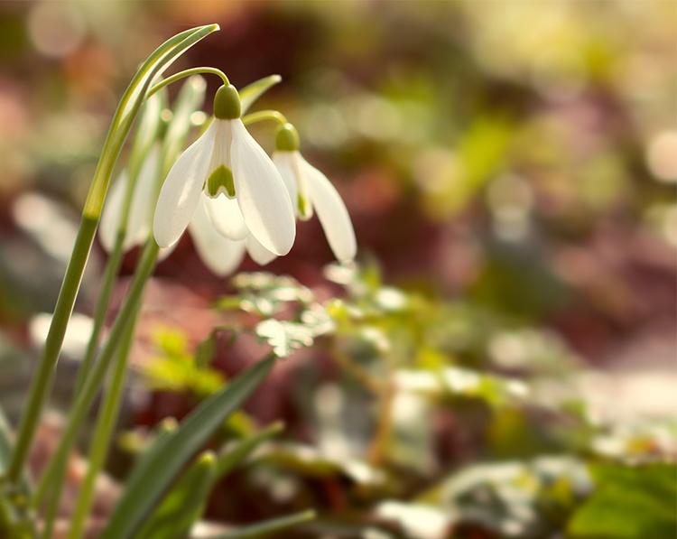 Spring arrival