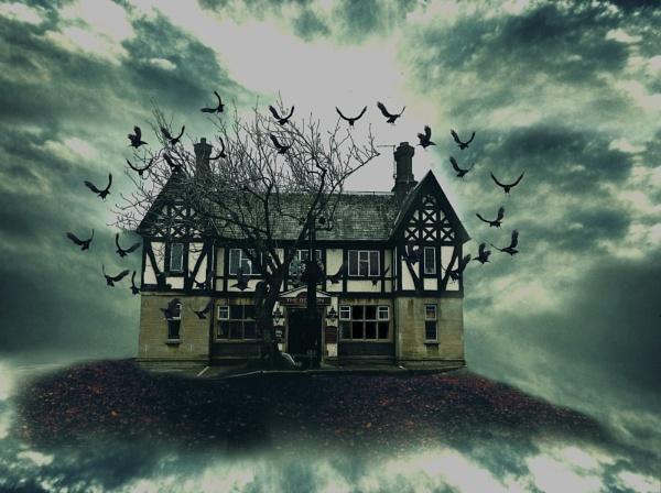 House of Birds by Sigita