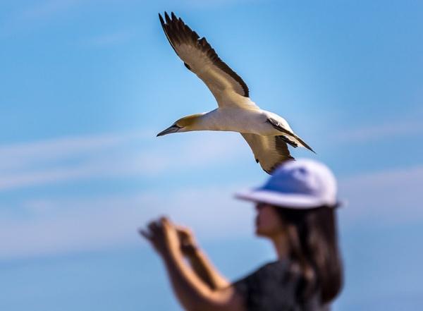 \'Watch the Birdie\' by briantjjones