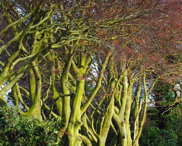 Tree Trunks by victorburnside