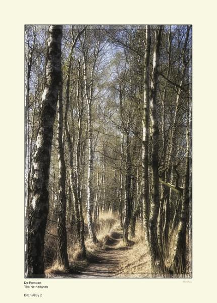 Birch Alley 2 by Pentaphobian