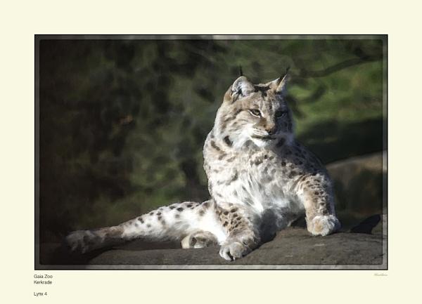 Lynx 4 by Pentaphobian
