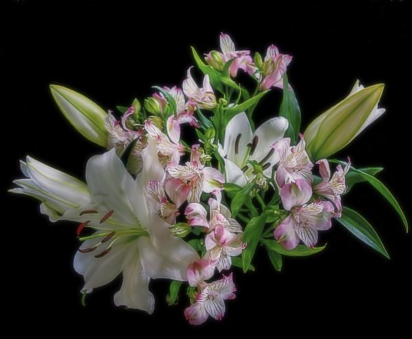Lilies by Tianshi_angie