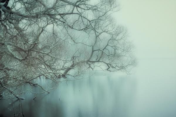 Frosty Fog by KelterPhotography
