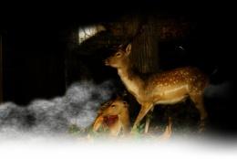 Roe-deers in the dark