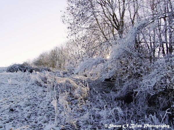 Frosty Field by ladaman98