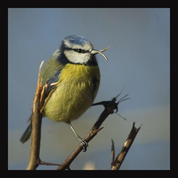 wrong beak by stuartbailey1963