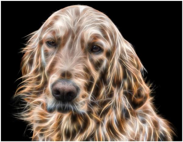 Shaggy dog by TrevBatWCC