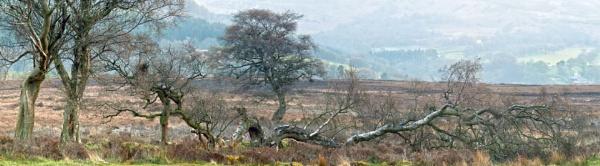 On Hawnby Moor by YorkshireSam