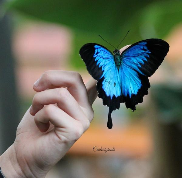 Swallowtail by Lynniesefforts
