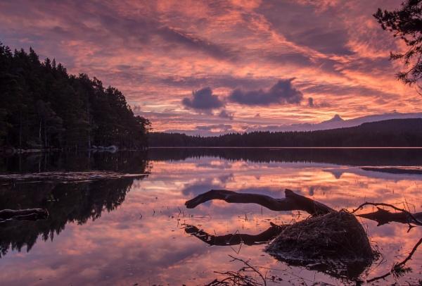 Dawn over Loch Garten by hrsimages