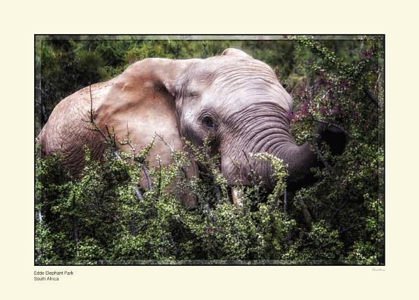 Elephant by Pentaphobian