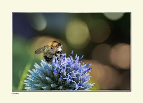 Bumblebee by Pentaphobian