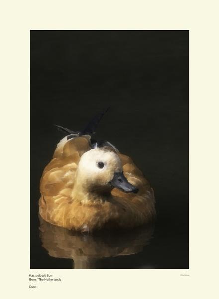 Duck by Pentaphobian