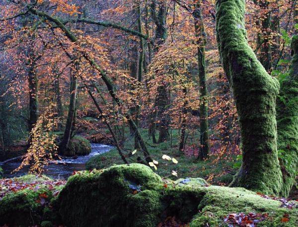 Autumn glory by derekcranch66torq