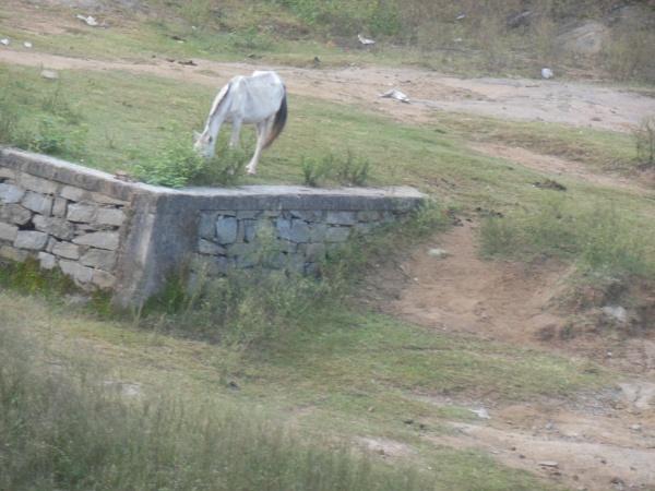 Horse on hills