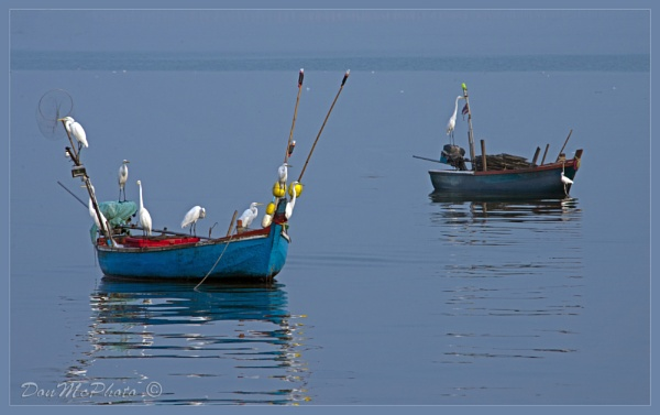 Egrets on Fishing Boats (I) by DonMc