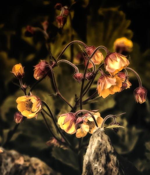 Dark Light by Rorymac