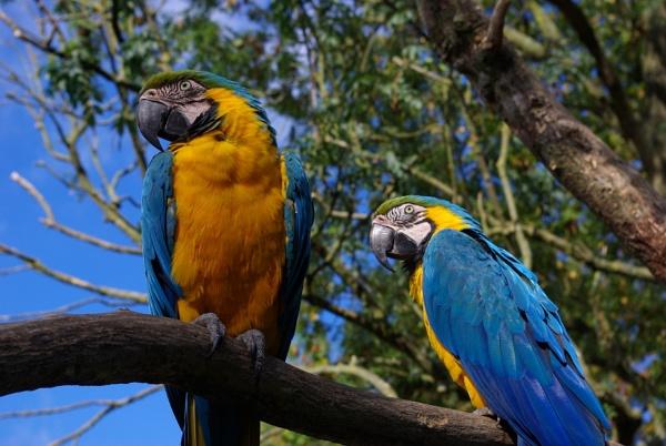 Couple of birds in a tree by telstar500