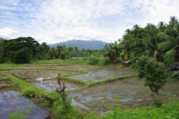 Balingasag rice fields by TheAviator