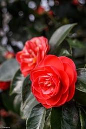 Macro Shot - Floral XVIII