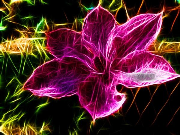 080-fractal flower by binder1