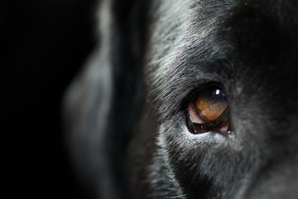 Puppy Dog Eye