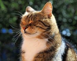 Brutus sunbathing