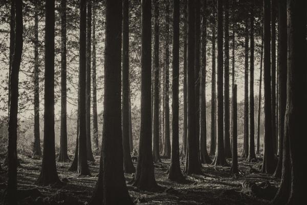In the dark dark woods.... by Janboy