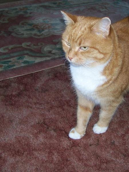 A cat called Doris. by GPC