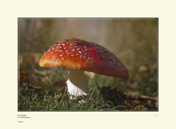 Fungus by Pentaphobian
