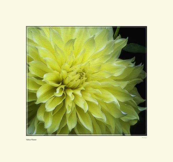 Yellow Flower by Pentaphobian