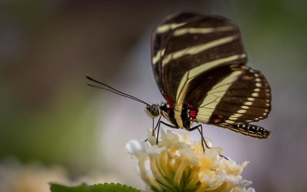 Butterfly1 by fossie1955