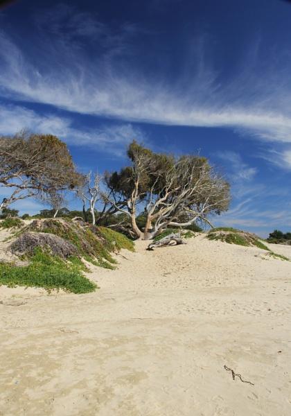 Lone eucalyptus by 2slow