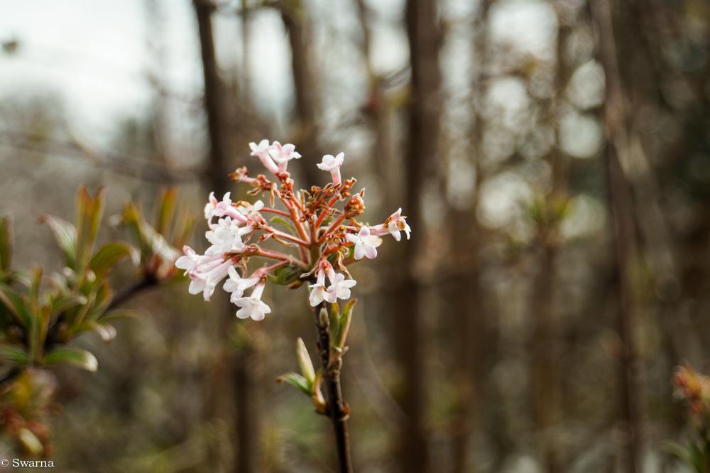 Macro Shot - Floral XIX