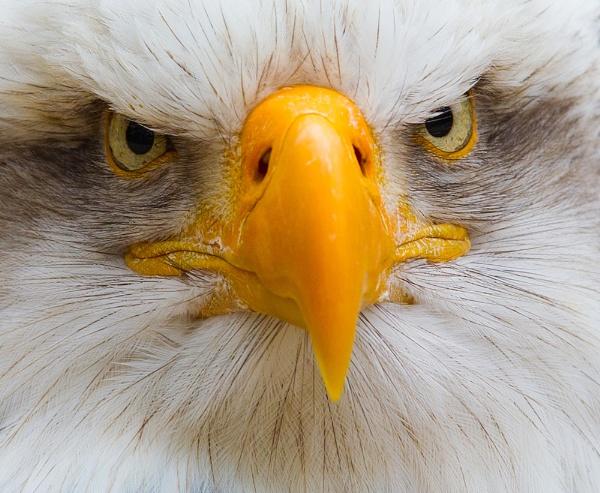 Grumpy by geoffash26