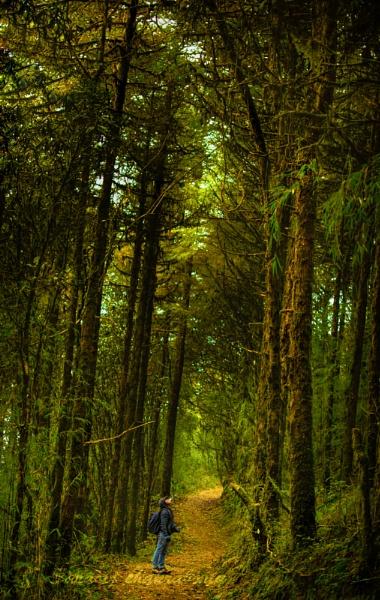 nature vs man by sarasij