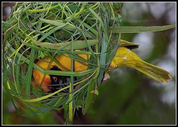 Inside the Nest. by johnke