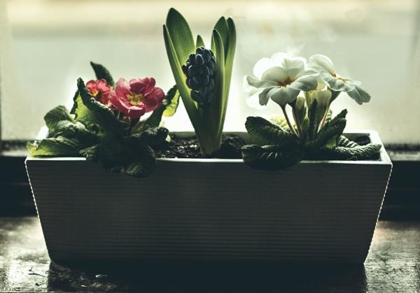 Spring flowers by Sigita